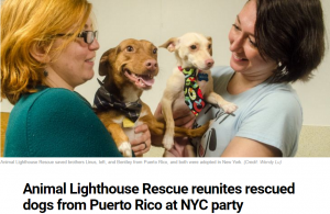 We hosted a sato dog (Puerto Rican street dog) for Animal Lighthouse Rescue.!