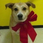 Dog with a big red bow