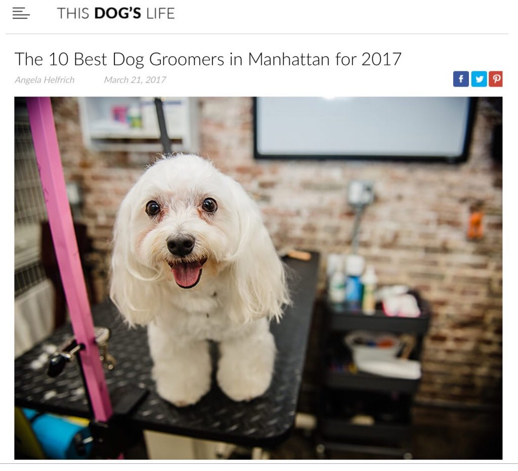 News media camp canine new york camp canine featured as one of top 10 groomers in nyc solutioingenieria Gallery