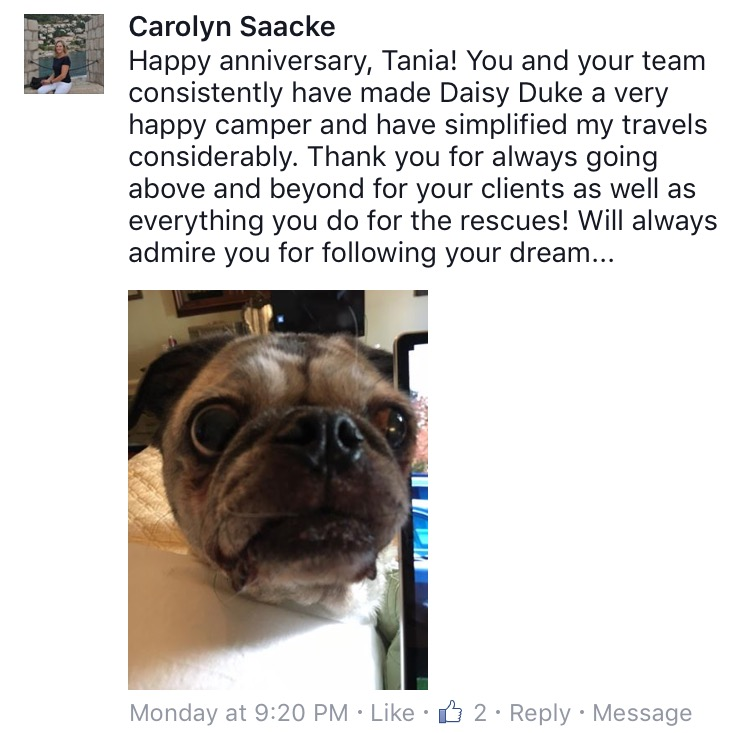 Fifth Anniversary Recap Camp Canine New York - 20 reasons why you should be thankful to have a dog