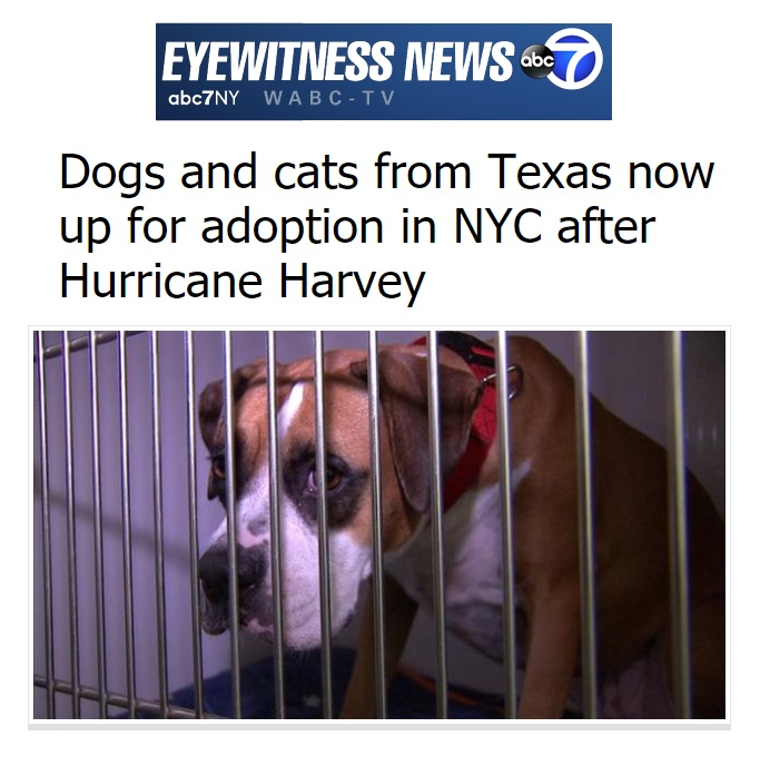 News media camp canine new york read the full article here solutioingenieria Gallery