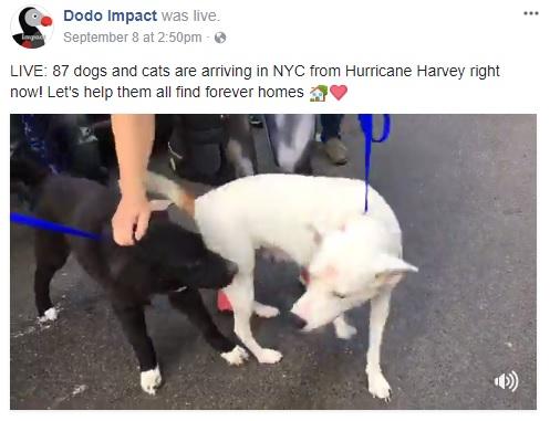 News media camp canine new york watch the full livestream here solutioingenieria Gallery