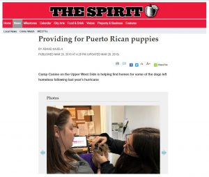 "Screenshot of feature from The Spirit, ""Providing for Puerto Rican puppies"""