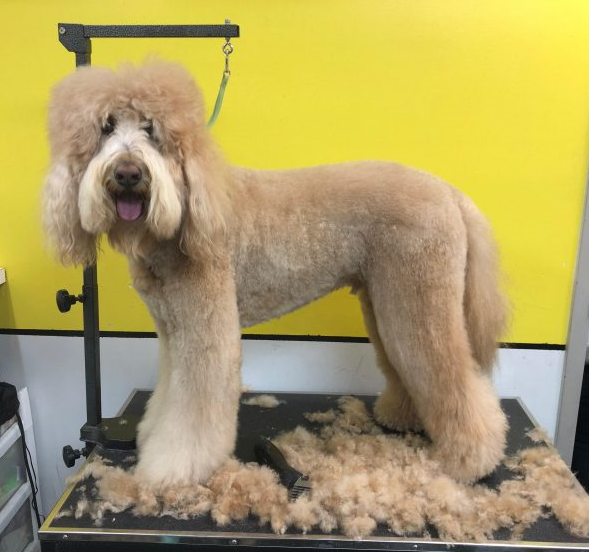 A Day in the Life of a Groomer - Camp Canine New York