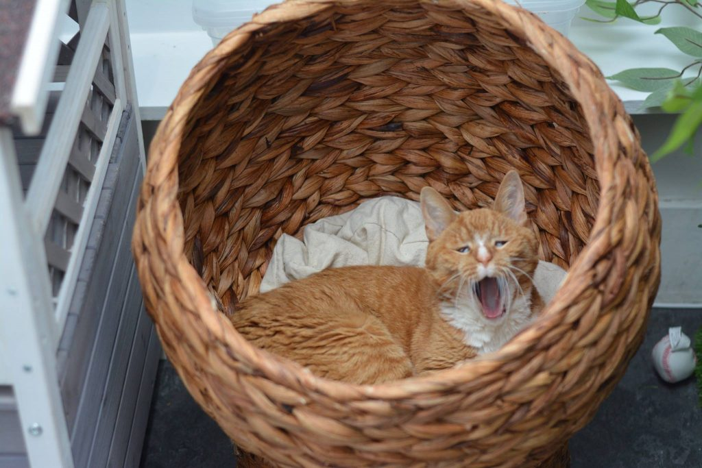 Sleepy cat in a basket