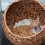 Sleepy cat in a basket
