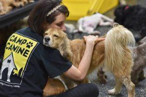 Staff member hugging a dog