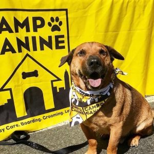 Dog smiling in front of Camp Canine