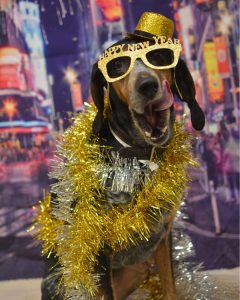 Dog wearing a New Year's costume