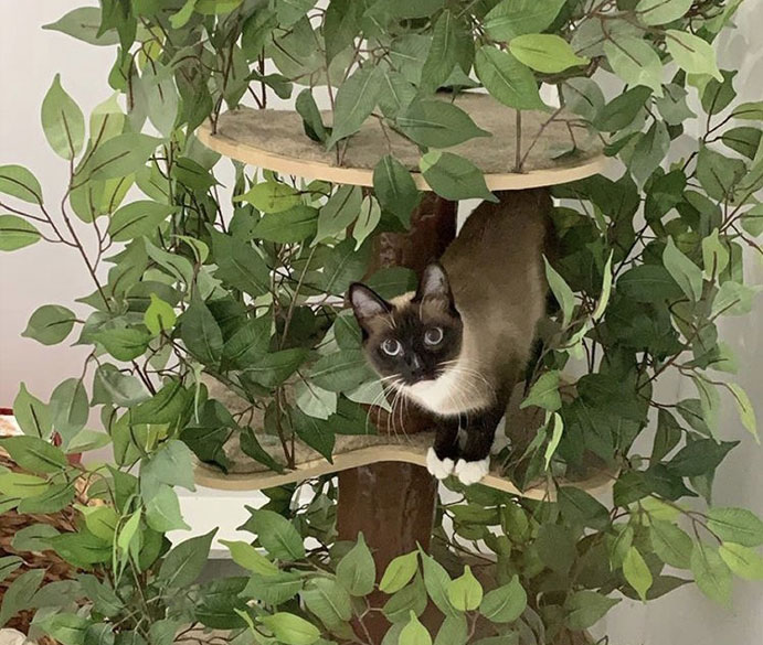 Cat in a cat tree with leaves